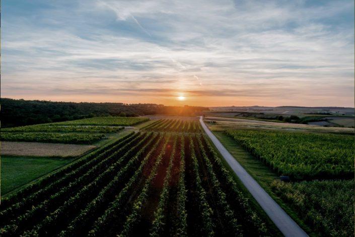 Weingut Bieglmayer Weingarten Sonnenuntergang