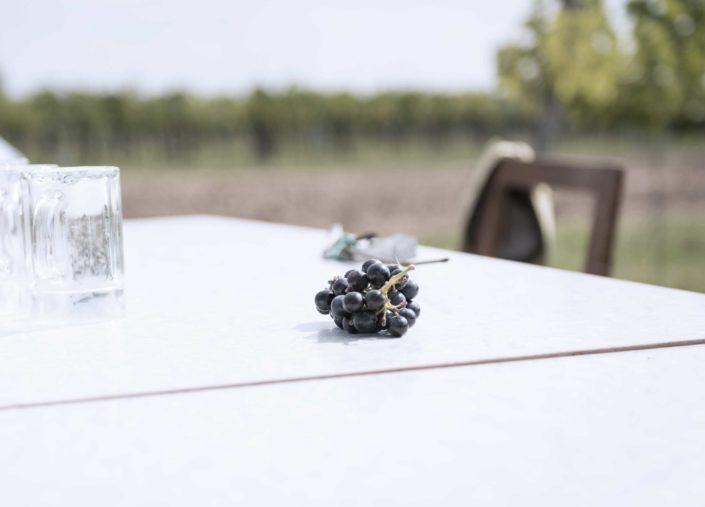 Weingut Bieglmayer rote Weintraube auf Tisch
