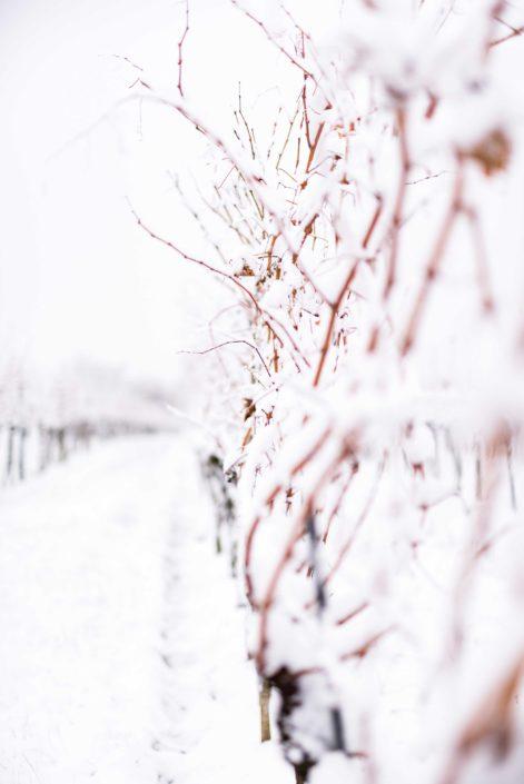 Weingut Bieglmayer Weingarten im Winter